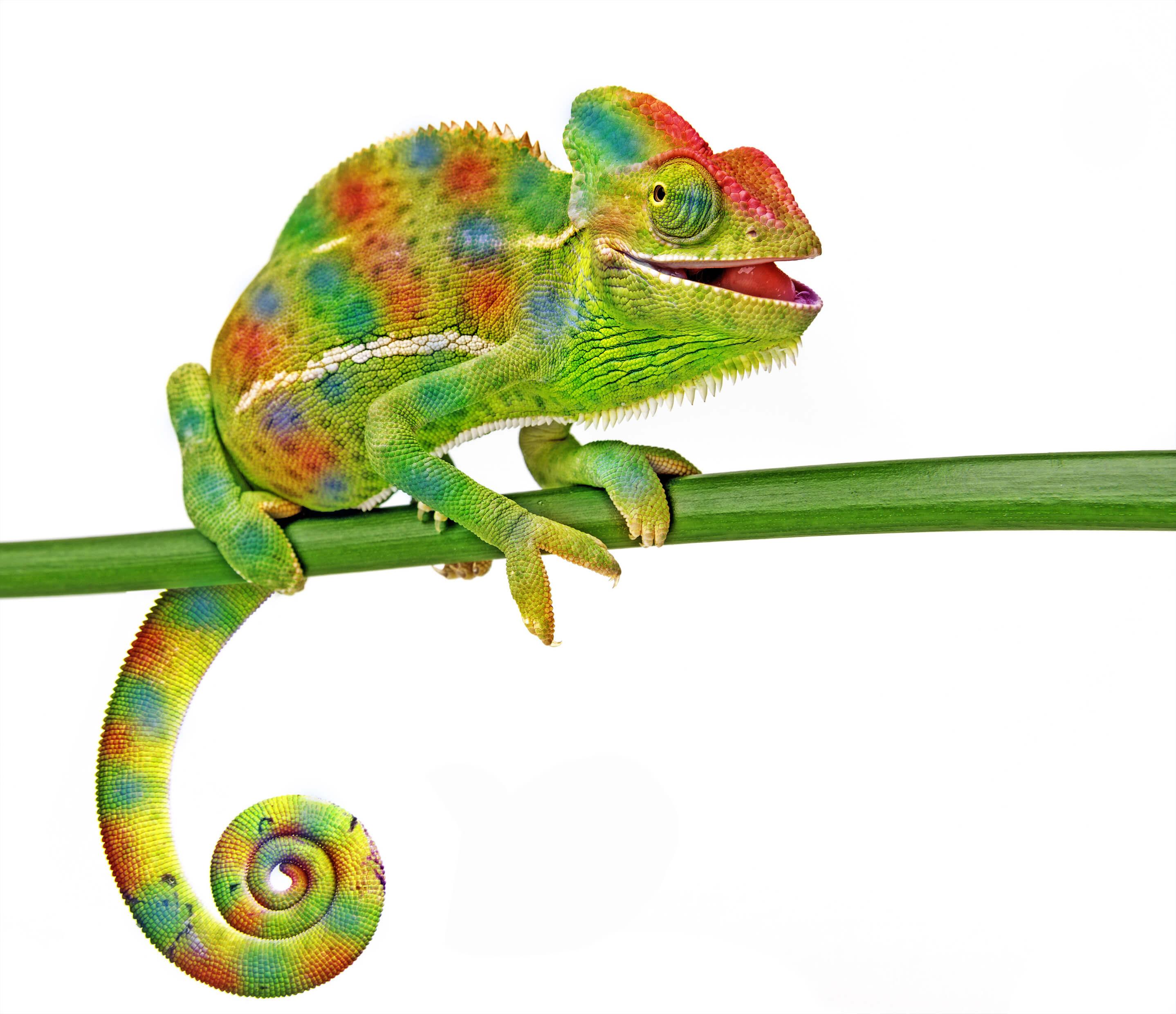 Why Chameleon Leadership?